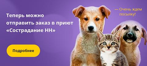 Поможем приюту «Сострадание НН» вместе